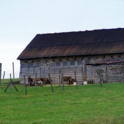 Nagyrédei Kecskefarm, kecskesajt